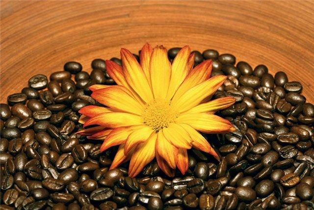kofeinoyeobertyvaniye