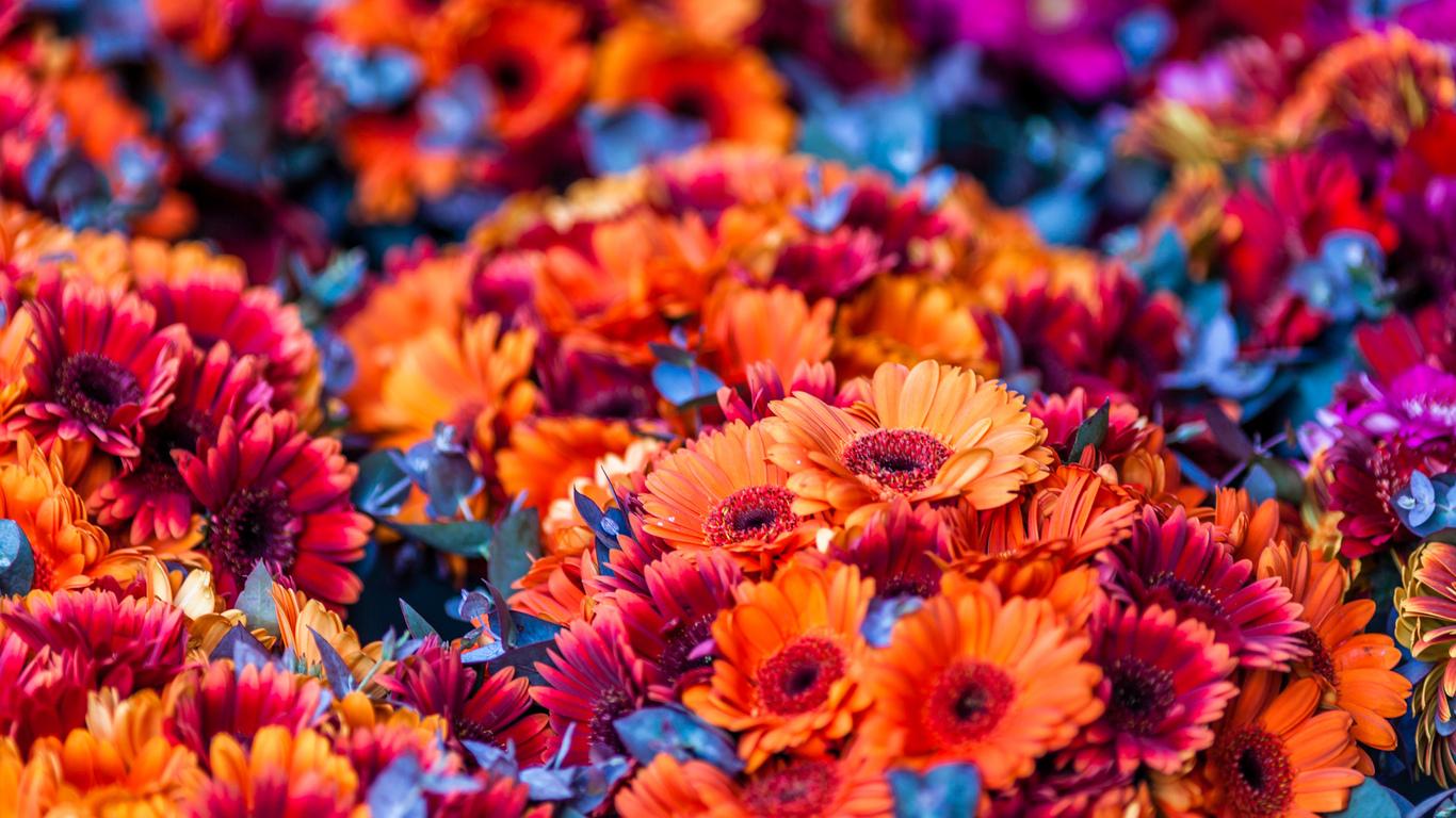 razdel floristika